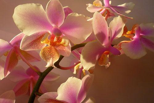 смотреть фото орхидеи